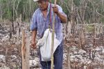 Dario of Chichimila planting in his milpa.  Note the saplings cut to waist level, these will resprout. Credit: MacduffEverton.com