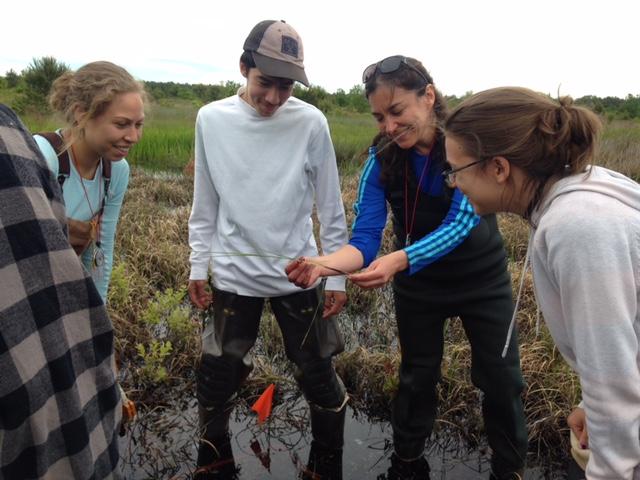 Daniela Shebitz showing plants in Pine Barrens