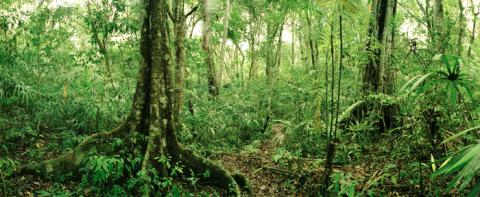an overview of the deciduous forest