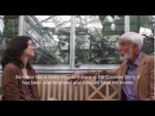Interview with Amadeo M. Rea